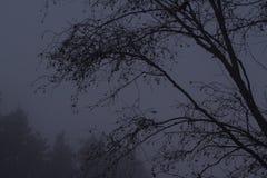 Rama de árbol de aliso en otoño Fondo de niebla del contraste oscuro imagenes de archivo