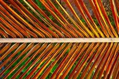 Rama de árbol anaranjado imágenes de archivo libres de regalías