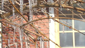Rama de árbol congelada en invierno almacen de metraje de vídeo