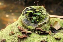 Rama de árbol cubierta de musgo con el hongo Fotografía de archivo