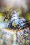 Rama de árbol de abeto Foto de archivo