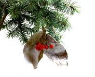 Rama de árbol de abeto aislada con las hojas y las bayas secas de la Navidad Fotografía de archivo libre de regalías