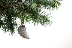 Rama de árbol de abeto aislada en blanco con el cono del pino del abeto Imágenes de archivo libres de regalías