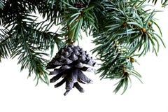 Rama de árbol de abeto aislada en blanco con el cono del pino del abeto Fotos de archivo