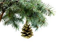 Rama de árbol de abeto aislada en blanco con el cono del pino del abeto Imagen de archivo libre de regalías