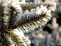 Rama de árbol de abeto cubierta con cierre de la nieve para arriba Imagenes de archivo