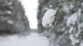 Rama de árbol de navidad en el paisaje hermoso del bosque de la naturaleza del invierno de la nieve, fondo borroso Imágenes de archivo libres de regalías