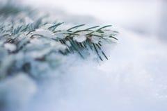 Rama de árbol de navidad en la nieve Imagenes de archivo