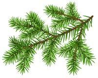 Rama de árbol de pino Rama mullida verde del pino