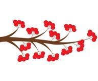 Rama de árbol del vector con las bayas rojas ilustración del vector