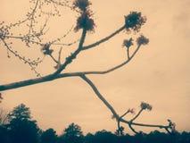 Rama de árbol del vintage Imagen de archivo