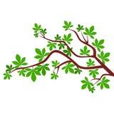 Rama de árbol - ejemplo Imagen de archivo libre de regalías