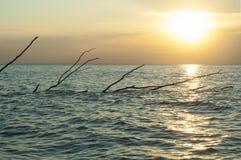 Rama de árbol en agua Fotos de archivo
