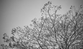 Rama de árbol en blanco y negro Fotos de archivo