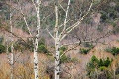 Rama de árbol en bosque durante la estación del otoño Fotos de archivo