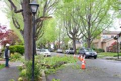 Rama de árbol en camino después de tormentas recientes en California septentrional Imagen de archivo libre de regalías
