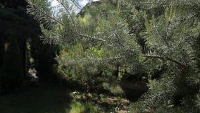 Rama de árbol en el sol almacen de video