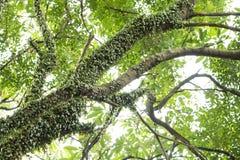 Rama de árbol en fondo del cielo Imagenes de archivo