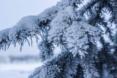 rama de árbol en la nieve Paisaje del invierno Foto de archivo