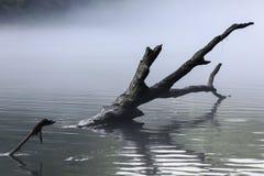 Rama de árbol en una corriente del río con la niebla gris Imágenes de archivo libres de regalías