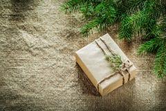 Rama de árbol envuelta de pino del thuya de la caja de regalo en fondo de despido Fotografía de archivo libre de regalías