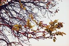 rama de árbol (estilo retro de los filtros) Imagen de archivo