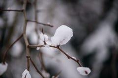 Rama de árbol fina en la nieve Fotografía de archivo
