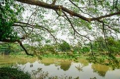 Rama de árbol grande sobre el río Foto de archivo libre de regalías