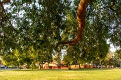 Rama de árbol grande y la hierba del parque Fotografía de archivo libre de regalías