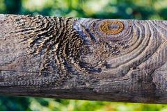 rama de árbol gruesa Foto de archivo libre de regalías