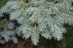 Rama de árbol imperecedera Imagen de archivo