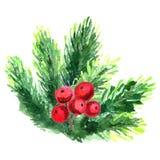 Rama de árbol de navidad del ejemplo de la acuarela elementos de la Abeto-aguja aislados en el fondo blanco Imagenes de archivo