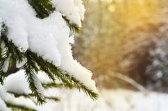 Rama de árbol nevada en la puesta del sol Fotografía de archivo