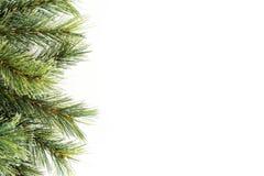 Rama de árbol de pino para la decoración de la Navidad fotos de archivo