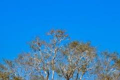 Rama de árbol que enmarca en un cielo claro imagen de archivo