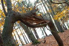 Rama de árbol quebrada en bosque fotografía de archivo