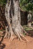 Rama de árbol San Ignacion Mini Mission Argentina Fotos de archivo libres de regalías