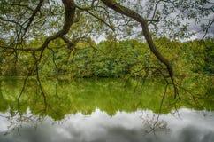 Rama de árbol sobre el agua Imagen de archivo libre de regalías