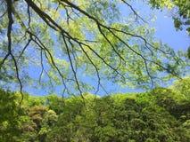 Rama de árbol verde contra el cielo azul Imagen de archivo