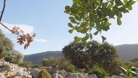 Rama de árbol y albañilería de piedra de la casa antigua en fondo metrajes