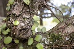 Rama de árbol y fondo de las hojas Foto de archivo
