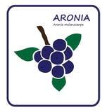Rama de Aronia fotos de archivo libres de regalías