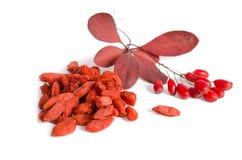 Rama de bérberos rojos maduros y de bayas secadas del goji Imágenes de archivo libres de regalías