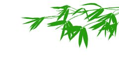 Rama de bambú horizontal del color verde con la hoja aislada en el fondo blanco fotografía de archivo