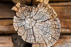 Rama de Brown, mostrando edad, años de árbol Árbol de la textura, secti cruzado Imagen de archivo