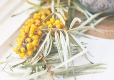 Rama de espino amarillo en el alféizar Foto de archivo