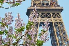 Rama de florecimiento de la castaña en el fondo de la torre Eiffel imagen de archivo libre de regalías