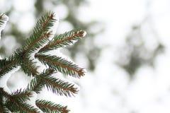 Rama de Furtree debajo de la nieve Imágenes de archivo libres de regalías