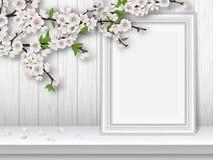 Rama de la cereza de la primavera y marco florecientes de la foto en una tabla blanca stock de ilustración