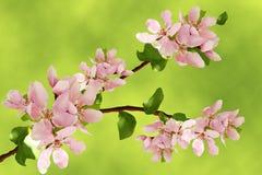 Rama de la flor fotografía de archivo libre de regalías